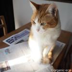 チラシのない新聞「SANKEI EXPRESS」