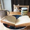 全粒粉のパン