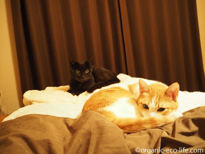 ベッドの猫たち