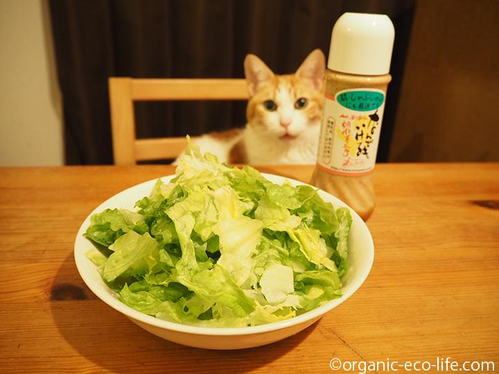 ゴマドレッシング好きの猫