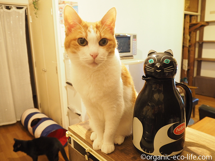 猫ポットと猫2匹