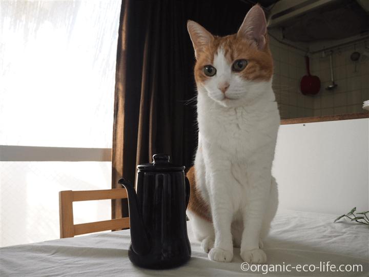 猫とスリムポット