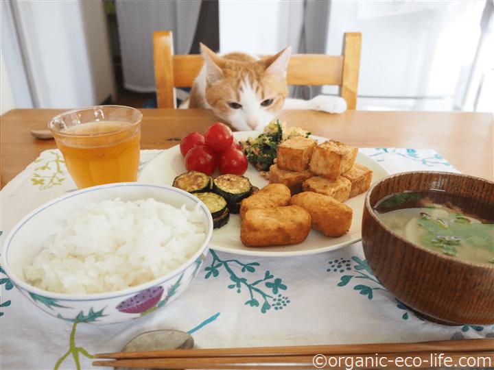 猫も興味津々