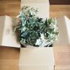 「ブルーミングスケープ」で人工観葉植物を買いました