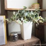 「ブルーミングスケープ」で買ったアイビーの人工観葉植物【レビュー】
