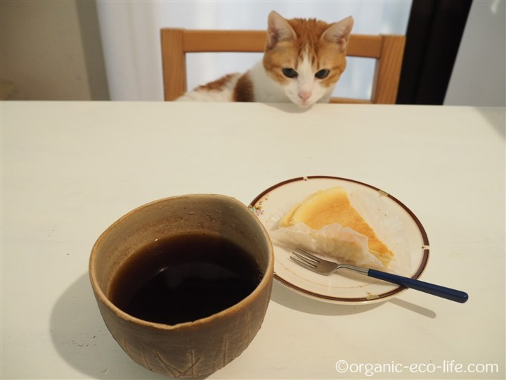 チーズケーキとコーヒーと猫