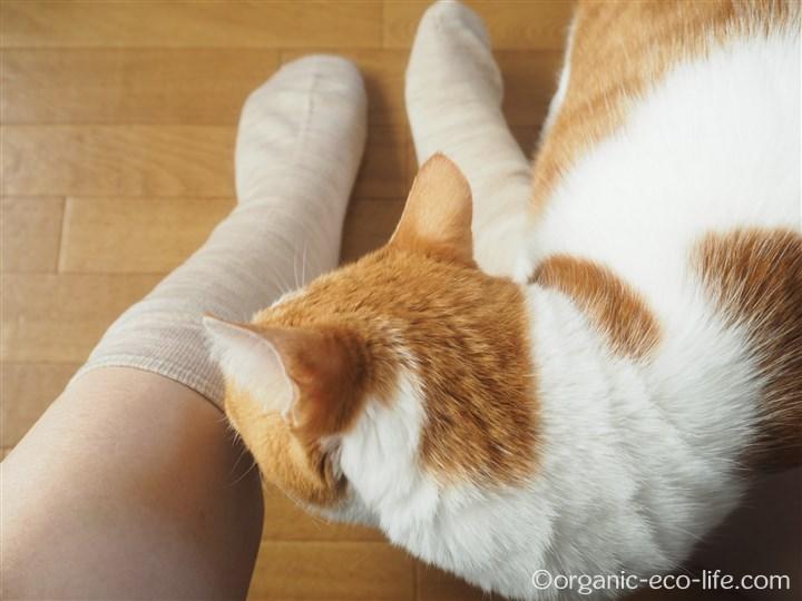 ウール冷えとり靴下と猫