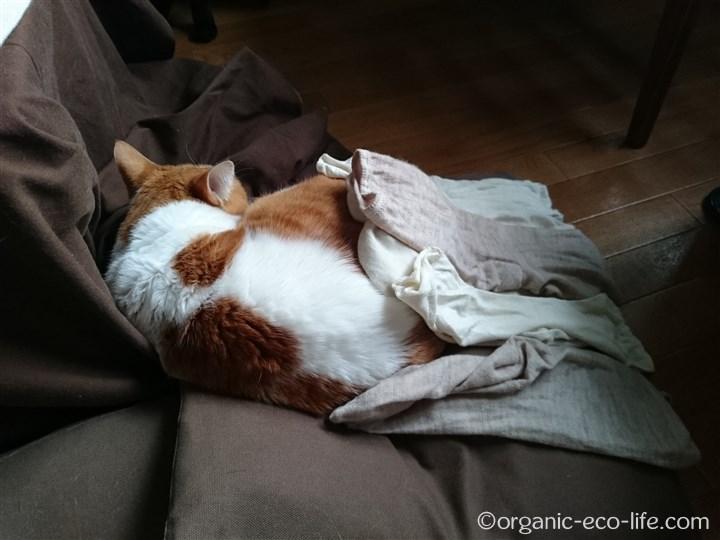 猫の上で靴下を乾かす