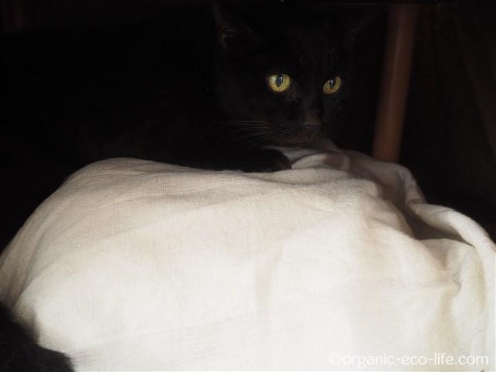 湯たんぽの上の猫