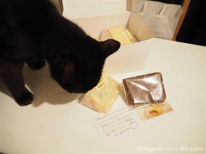 猫とシフォンケーキ