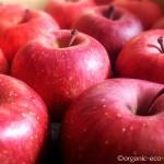 無農薬・有機栽培・自然農法のフルーツや野菜の産直通販「ふるさと21」