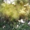 花粉症は毒出しで、スギ花粉が悪いわけではないと分かりました【冷えとり健康法】