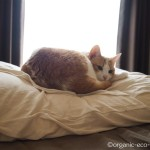冷えとり健康法で有名な「快肌布(かいきふ)」を猫も愛用しています【レビュー】