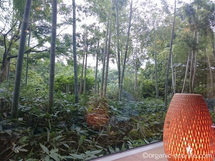 竹林を見ながら