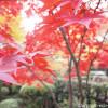 【新座】平林寺の紅葉をクロスバイクで見に行きました