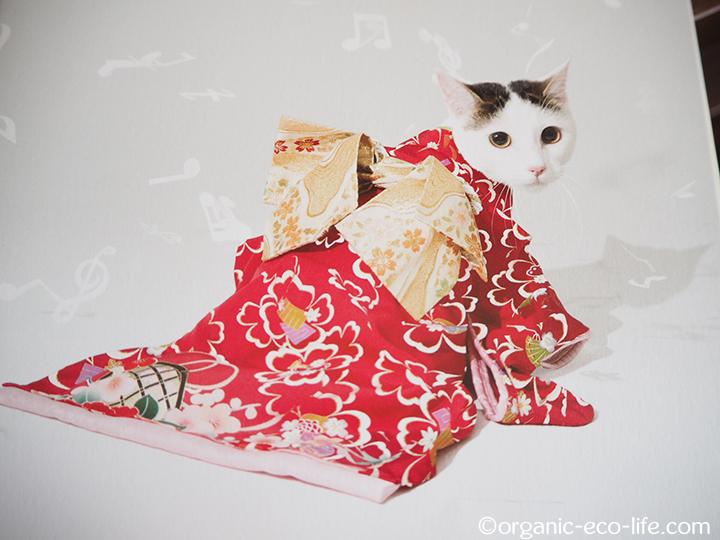 歌詞カードの猫さん