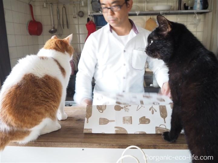 包装紙をたたむ彼と猫2匹