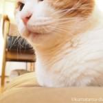 猫を飼っている人の方が健康~「ニャンとびっくり!科学で探る ネコとヒトとの優しい関係」より~