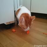 猫も大好きな甘くておいしい「大地宅配」の有機野菜
